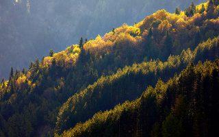 Τα δάση των κωνοφόρων είναι ο φυσικός πνεύμονας των Τζουμέρκων. (Φωτογραφία: ΓΙΩΡΓΟΣ ΤΣΑΦΟΣ)