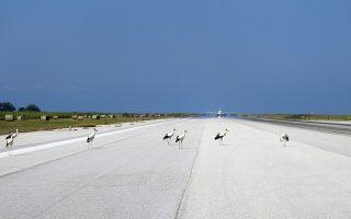 kefalaio-bird-strike-me-poioys-tropoys-prostateyontai-oi-aerometafores-alla-kai-i-agria-zoi-2353017