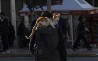Στους δρόμους της Αθήνας. Αν και δεν τους αρέσει πολύ να είναι δεμένες, η κυρία της φωτογραφίας έχει την ιδανική θέση. Ψηλά, όπως το συνηθίζουν όλες οι γάτες και μέσα στην ζεστή κουκούλα του αφεντικού της. (AP Photo/Petros Giannakouris)