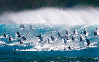 Στο Νέο Ευγενίδειο Πλανητάριο προβάλλεται η ταινία θόλου «Ωκεανοί. Ο γαλάζιος πλανήτης».