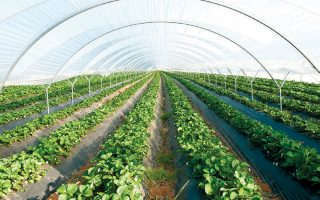 Σύμφωνα με ανακοίνωση του υπουργείου Ανάπτυξης, οι πληρωμές φτάνουν το 35,8%, συμπεριλαμβανομένου του Προγράμματος Αγροτικής Ανάπτυξης.