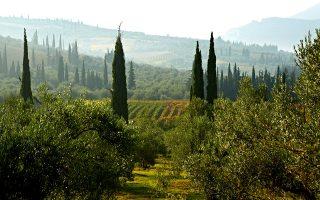25-chronia-gaia-wines-to-chroniko-mias-epitychimenis-oinikis-diadromis0