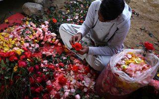 Ξεφλουδίζοντας τριαντάφυλλα. Ενα ένα απομακρύνονται τα μαύρα φύλλα για να μείνουν όσο γίνεται φρέσκα και άσπιλα. Ετσι πρέπει, για να ταιριάξουν με τον λαμπερό έρωτα που γιορτάζει. Η φωτογραφία από τις ετοιμασίες για την ημέρα του Αγίου Βαλεντίνου στο Πακιστάν.  EPA/SHAHZAIB AKBER