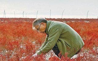 Ο Jiho Im περιπλανήθηκε για χρόνια σε ορεινά χωριά και πεδιάδες, σε δάση και ποτάμια της κορεατικής χερσονήσου.