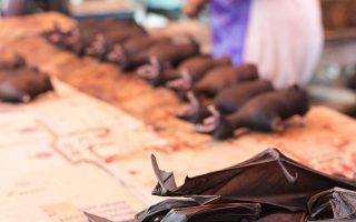 «Χασάπικο» σε υπαίθρια αγορά της Ινδονησίας που πουλάει νυχτερίδες! SHUTTERSTOCK