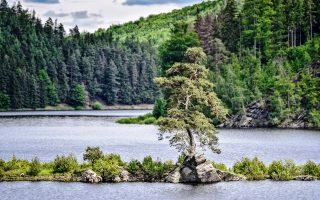 Το Πεύκο του Χουντομπίν κέρδισε το βραβείο στον διαγωνισμό Ευρωπαϊκό Δέντρο της Χρονιάς (European Tree of the Year) 2020