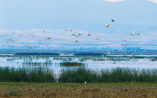Η Λίμνη Κάρλα. Το υπουργείο Περιβάλλοντος προτείνει την υποκατάσταση των φορέων διαχείρισης προστατευόμενων περιοχών από μια κεντρική αρχή με τοπικά παραρτήματα.