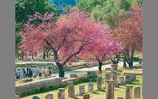 Το υπουργείο Πολιτισμού ανακοίνωσε και ένα νέο μεγάλο έργο για τον αρχαιολογικό χώρο της Ολυμπίας (φωτ.).