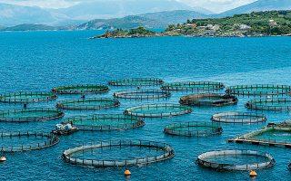 Το 80% της ελληνικής παραγωγής ψαριών ιχθυοκαλλιέργειας εξάγεται, με τους κυριότερους προορισμούς αυτών να είναι κυρίως χώρες εντός της Ευρωπαϊκής Ενωσης και κάποιες άλλες τρίτες χώρες, με πιο σημαντικές τις ΗΠΑ.