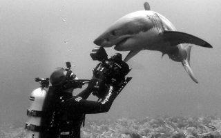 Ο Άντι Καζαγκράντε καταδύεται σε αχαρτογράφητα νερά, προκειμένου να κινηματογραφήσει τη μυστήρια ζωή του υδάτινου κόσμου μας, και ιδιαίτερα των καρχαριών, για τους οποίους έχει πάθος από νεαρή ηλικία.