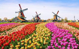 Η Ολλανδία εξάγει φυτά και λουλούδια αξίας περίπου 6 δισ. ευρώ ετησίως. Επιπλέον, οι καλλιεργητές πωλούν περίπου 12 δισ. λουλούδια στις αγορές έξω από το Αμστερνταμ. Φέτος όμως οι εξαγωγές είναι μηδενικές.