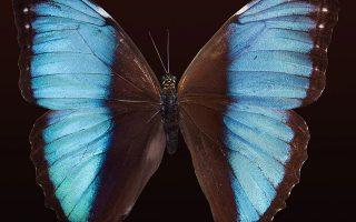 Η πεταλούδα χτυπάει τα φτερά της στην Κίνα και προκαλεί χάος στην Ευρώπη. Το φαινόμενο κατά το οποίο μια μεταβολή στη ροή γεγονότων οδηγεί σε μια εξέλιξη διαφορετική από εκείνη που θα λάμβανε χώρα αν δεν είχε συμβεί.