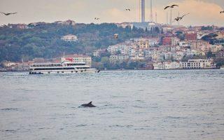 ta-delfinia-chairontai-enan-vosporo-asynithista-galinio-chari-sto-lockdown0