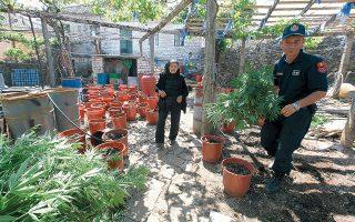 Aνδρες της αλβανικής αστυνομίας, σε παλαιότερη επιχείρησή τους, σε φυτώριο ινδικής κάνναβης μέσα στην αυλή σπιτιού στο χωριό Λαζαράτι. Το κλείσιμο των χερσαίων συνόρων με την Αλβανία είναι πιθανό να ωθήσει τα κυκλώματα στη διά θαλάσσης μεταφορά μεγάλων ποσοτήτων ναρκωτικών.