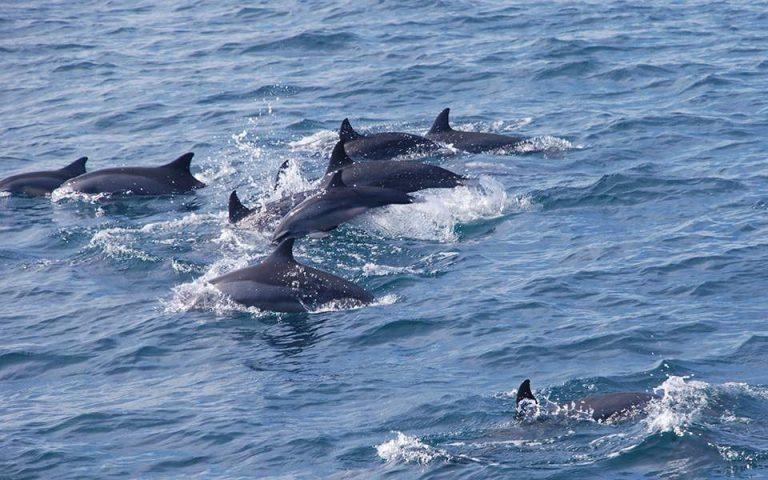 Δελφίνια βρέθηκαν νεκρά, άγρια δολοφονημένα, στο Αιγαίο