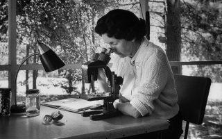 Η βιολόγος Rachel Carson εργάζεται πάνω από το μικροσκόπιο στο σπίτι της. © Alfred EisenstaedtLIFE/ Getty Images/ Ideal Image