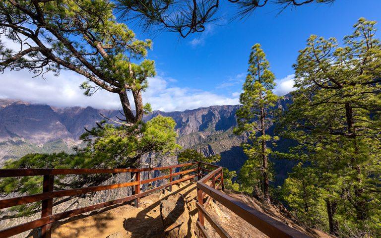 Πευκοδάσος στο εθνικό πάρκο της Καλντέρα ντε Ταμπουριέντε,  στη Λα Πάλμα των Καναρίων Νησιών. (Φωτογραφία: Shutterstock)