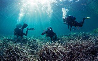 Τα θαλάσσια λιβάδια είναι από τα πιο κοινά παράκτια οικοσυστήματα της Γης, καλύπτοντας τουλάχιστον 300.000 τ. χλμ. σε 159 χώρες. (ΦΩΤ. ΔΗΜΗΤΡΗΣ ΠΟΥΡΣΑΝΙΔΗΣ)