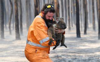 Φωτ. REUTERS:  Οι πυρκαγιές τον Νοέμβριο του 2019 κατέστρεψαν σχεδόν το ένα τέταρτο του φυσικού τους περιβάλλοντος σε όλη την Πολιτεία της Νέας Νότιας Ουαλίας