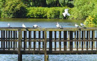 Πουλιά στο Κάπστοουν Φαρμ του Κεντ, εν μέσω έξαρσης της πανδημίας.