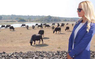 Υφυπουργός Αγροτικής Ανάπτυξης εν... δράσει!