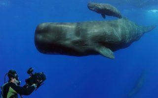 h-omega-mas-proskalei-na-doyme-tin-tainia-planet-ocean0