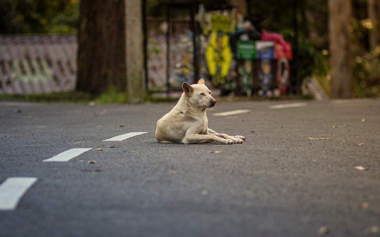 Αλυτο πρόβλημα οι συνεχείς επιθέσεις από αδέσποτα σκυλιά στη Θεσσαλονίκη