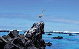 Αποψη του εθνικού δρυμού στη νήσο Ιζαμπέλα των Γκαλαπάγκος. (Φωτ. REUTERS)