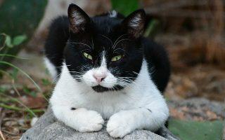 italia-gatos-tethike-se-examini-karantina0