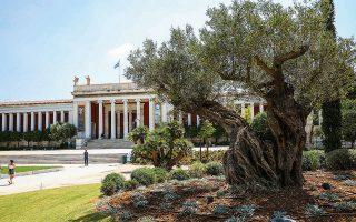 Η υπεραιωνόβια ελιά των 1.300 ετών ξεχωρίζει στον κήπο χωρίς να εμποδίζει οπτικά τη θέα από την πόλη προς το Εθνικό Αρχαιολογικό Μουσείο.