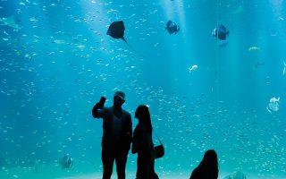 Επίσκεψη στο Εθνικό Κέντρο Θάλασσας Ναυσικά στη Γαλλία.  OLIVIER HOSLET