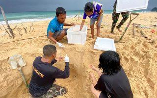 Αξιωματούχοι της υπηρεσίας άγριας  φύσης στην Ταϊλάνδη συγκεντρώνουν αυγά χελώνας σε παραλία στα νότια της χώρας για να εξετάσουν τις επιπτώσεις του τουρισμού στο υπό  εξαφάνιση είδος.