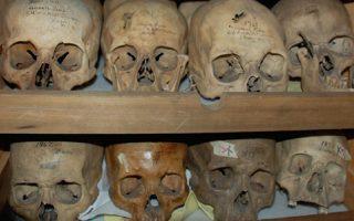 Η συλλογή των κρανίων ανήκε στον γιατρό Σάμιουελ Τζορτζ Μόρτον και βρισκόταν σε ιδιωτική αίθουσα του πανεπιστημίου.
