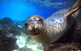 Την περίοδο της καραντίνας, στις ακτές των νησιών ξεβράζονταν κατασφαγμένες φώκιες και δελφίνια. (Φωτ. SHUTTERSTOCK)