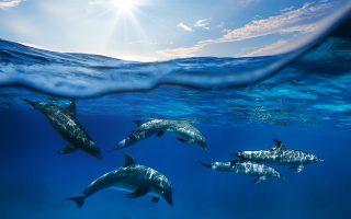Για τα δελφίνια, επιστήμονες προτείνουν να αναγνωριστούν ως «μη ανθρώπινα πρόσωπα», καθώς είναι τα δεύτερα πιο έξυπνα πλάσματα μετά τον άνθρωπο. (Φωτ. SHUTTERSTOCK)