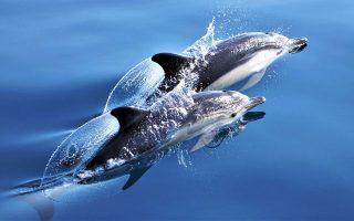 Σε λίγο τα δελφίνια θα έχουν το δικό τους κτηνιατρείο!
