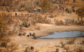 Κοπάδι ελεφάντων μετακινείται στη σαβάνα της Μποτσουάνας αναζητώντας νερό.