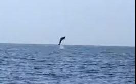 entyposiakes-voyties-delfinion-sto-kavo-gkreko-tis-kyproy-binteo0