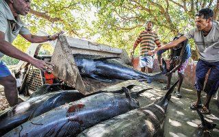 Οι αρχές του Μαυρίκιου περισυνέλεξαν 18 πτώματα δελφινιών, γνωστών με την ονομασία «Δελφίνια της Ηλέκτρας», τα οποία εντοπίσθηκαν στη δημοφιλή τουριστική παραλία του νησιού, Γκραν Σαμπλ. (Φωτ. EPA)