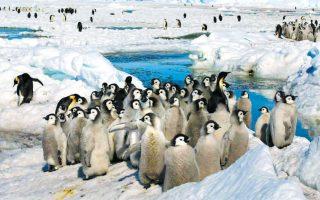 Εντεκα νέες αποικίες αυτοκρατορικών πιγκουίνων εντόπισαν επιστήμονες στην Ανταρκτική, ύστερα από μελέτη δορυφορικών εικόνων της παγωμένης ηπείρου. Η ανακάλυψη ενθαρρύνει ιδιαιτέρως τον επιστημονικό κόσμο, καθώς αποκαλύπτει ότι ο πληθυσμός τους έχει αυξηθεί σε ποσοστό 5% με 10%, ξεπερνώντας το μισό εκατομμύριο.
