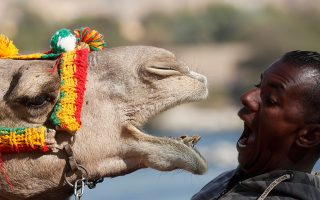 Hossam Nasser, 32, plays with his camel