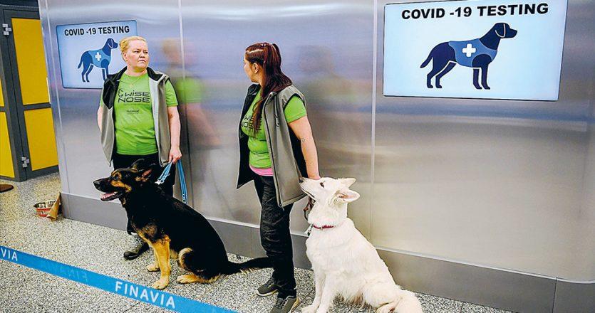 Δύο από τα σκυλιά που έχουν επιστρατευθεί στο αεροδρόμιο του Ελσίνκι για να οσμίζονται επιβάτες, πιθανά κρούσματα κορωνοϊού. (Φωτ. Lehtikuva / REUTERS)