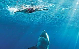 Οι παφλασμοί των χεριών και των ποδιών, ειδικά των απελπισμένων ναυαγών, προσελκύουν τους καρχαρίες από μίλια μακριά. SHUTTERSTOCK