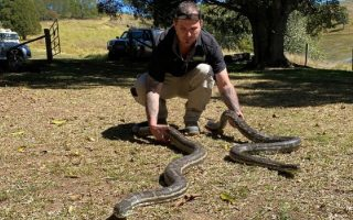 Φωτ.: Brisbane North Snake Catchers and Relocation