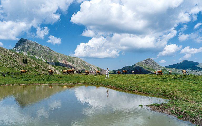 Το οροπέδιο της Νιάλας φιλοξενεί το καλοκαίρι βοσκούς που ανεβάζουν από τα πεδινά τα ζώα τους. (Φωτογραφία: ΠΕΡΙΚΛΗΣ ΜΕΡΑΚΟΣ)