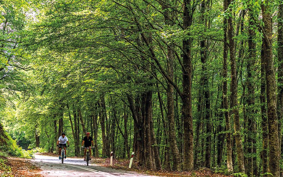 Το κατάφυτο βουνό του Χολομώντα προσφέρεται για βόλτες και ποδήλατο στο δάσος. © ΠΕΡΙΚΛΗΣ ΜΕΡΑΚΟΣ