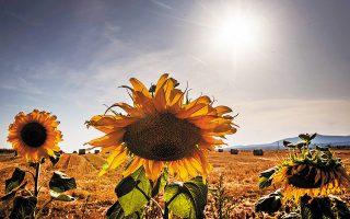 Σύμφωνα με την Υπηρεσία Καταγραφής της Κλιματικής Αλλαγής, η μέση θερμοκρασία στην επιφάνεια της Γης τον Σεπτέμβριο ήταν κατά 0,05 βαθμούς Κελσίου υψηλότερη απ' ό,τι πέρυσι (φωτ. A.P.).