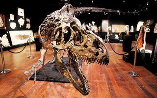 Οι διαστάσεις του σκελετού εντυπωσιάζουν, καθώς πρόκειται για ένα από τα μεγαλύτερα δείγματα αλλόσαυρου που έχουν καταγραφεί ποτέ.