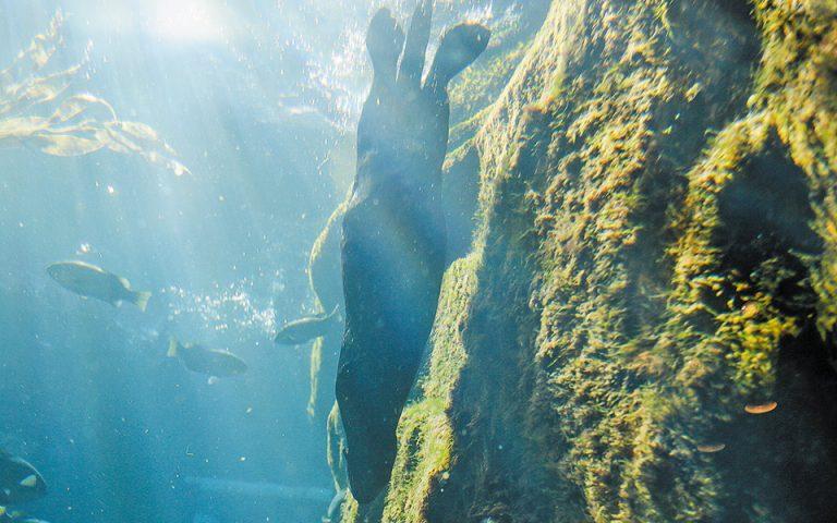 Υπερθέρμανση του θαλάσσιου βυθού