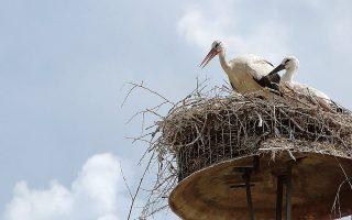 Μαζί με τα αρχαία, προστατεύονται και τα πτηνά.